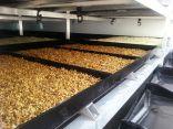 تدشين مشروع استنبات الشعير الاخضر بجمعية فتاة الأحساء