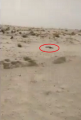 بالفيديو والصور..العثور على جثة مجهول في منتزه الأحساء الوطني .. والشرطة تحقق