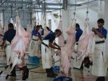 أمانة الشرقية : أكثر من ٢٠ الف أضحية استقبلتها المسالخ المركزية يومي العيد