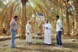 سوسة الاحساء تكافح حفارات النخيل بخلايا الطاقة الشمسية