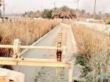 """قنوات """"ري"""" تلحق الضرر في مزارع واحة #الاحساء"""